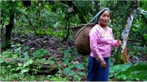 Mujeres y economía popular y solidaria en la Amazonía ecuatoriana